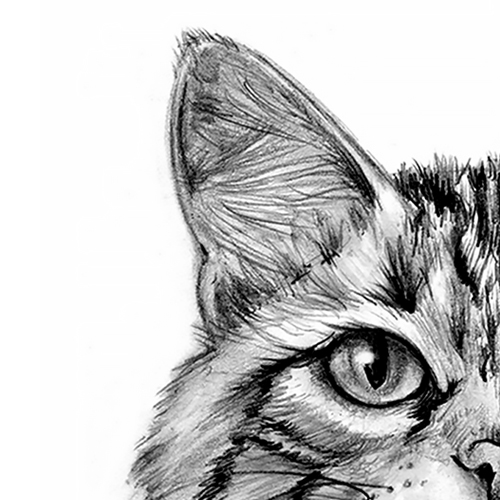 Comment dessiner un chat?