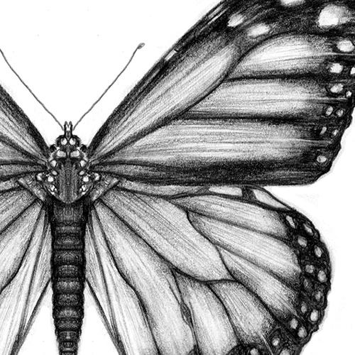 Comment dessiner un papillon?