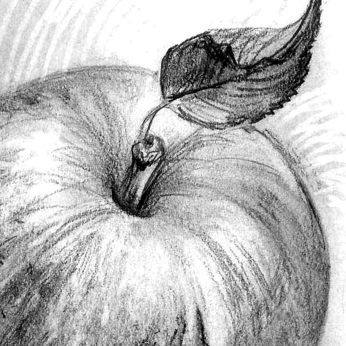 Comment dessiner une citrouille?