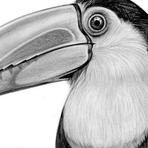image capsule la toucan