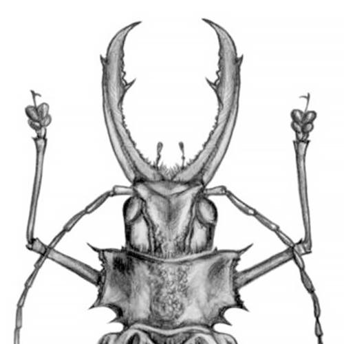 image capsule la coleoptere