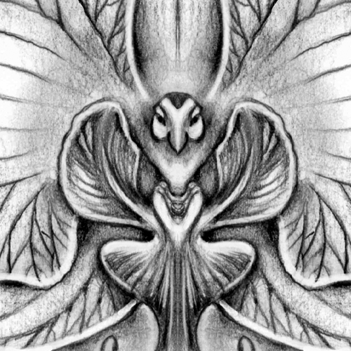 image capsule la orchide